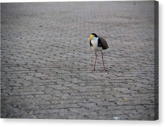 Lonely Bird Canvas Print