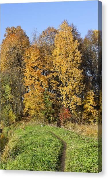 Lonely Dog In Autumn Canvas Print by Aleksandr Volkov