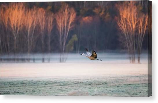 Cranes Canvas Print - Lonely Flyer by Jane Luo