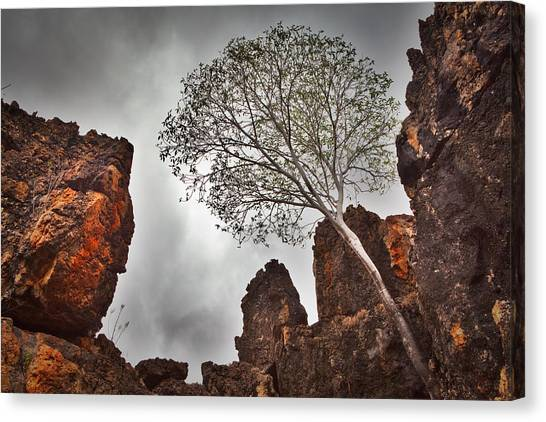 Harsh Conditions Canvas Print - Lonely Gum Tree by Dirk Ercken