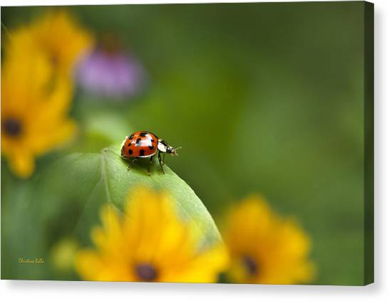 Canvas Print featuring the photograph Lonely Ladybug by Christina Rollo