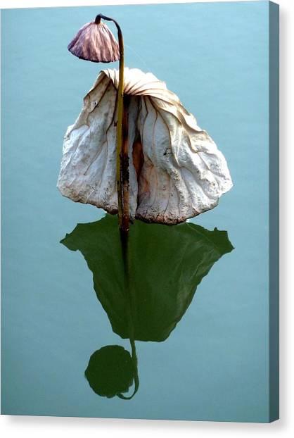 Lonely Lotus Canvas Print