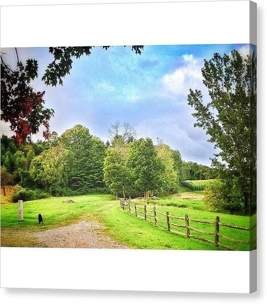 Vermont Canvas Print - Lonesome, And Happy Pup by James Whaley Cart