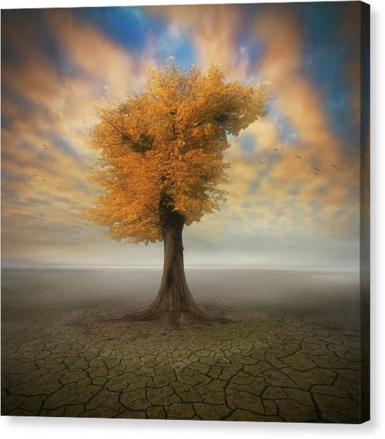 Mud Canvas Print - Lonesome by Piotr Krol (bax)