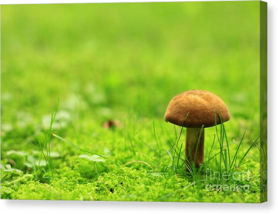 Lonesome Wild Mushroom On A Lush Green Meadow Canvas Print