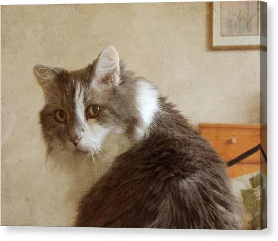 Long-haired Cat Portrait Canvas Print