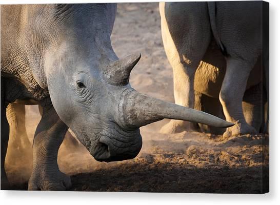Rhinocerus Canvas Print - Long Horn by Andy-Kim Moeller