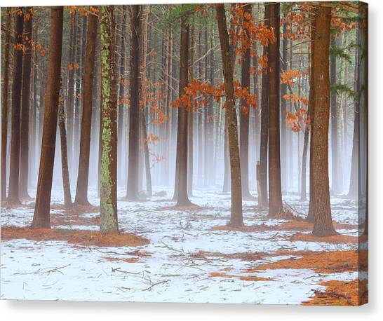 Long Island Pine-oak Forest Canvas Print