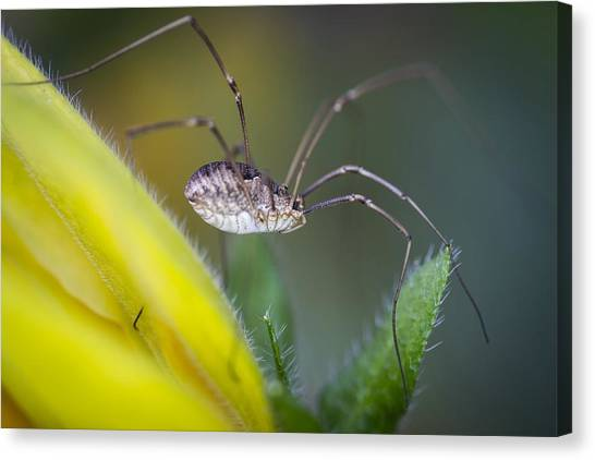 Long Sexy Legs Canvas Print