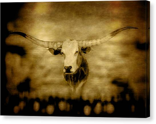 Longhorn Bull Canvas Print