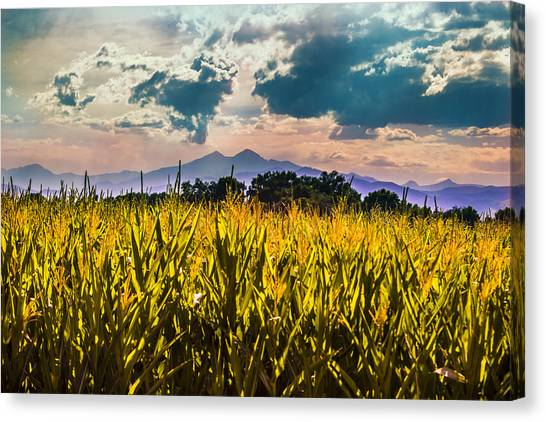 Longs Peak Harvest Canvas Print by Rebecca Adams