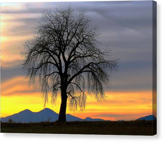 Longs Peak Sunset Canvas Print by Rebecca Adams