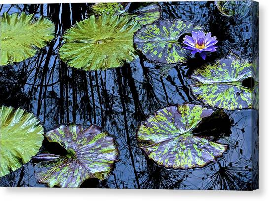 Longwood Lily Canvas Print by Thomas Camp
