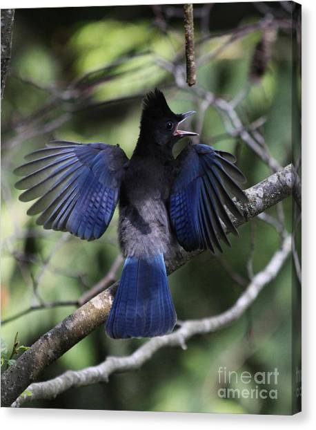 Look At My Wings Canvas Print