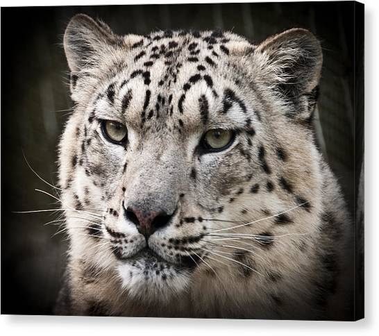 Look Into My Leopard Eyes Canvas Print