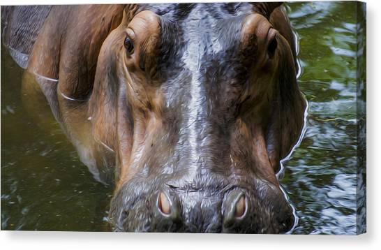 Hippos Canvas Print - Look Me In The Eyes by Aged Pixel