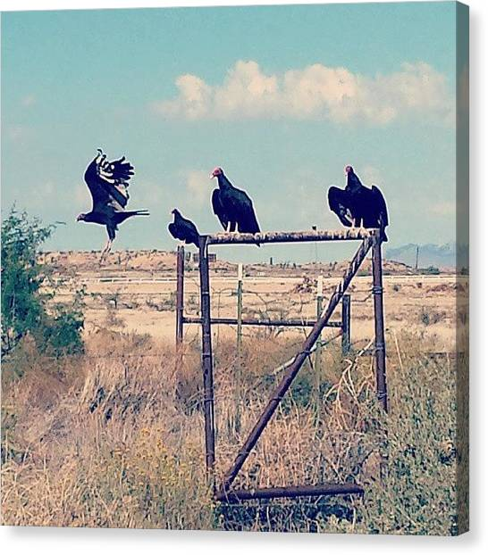 Vultures Canvas Print - Lookin For An Easy Meal. #buzzard by Travis Seale
