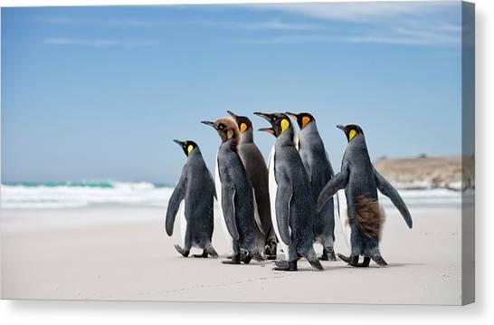 Penguins Canvas Print - Looking At Sea by Joan Gil Raga
