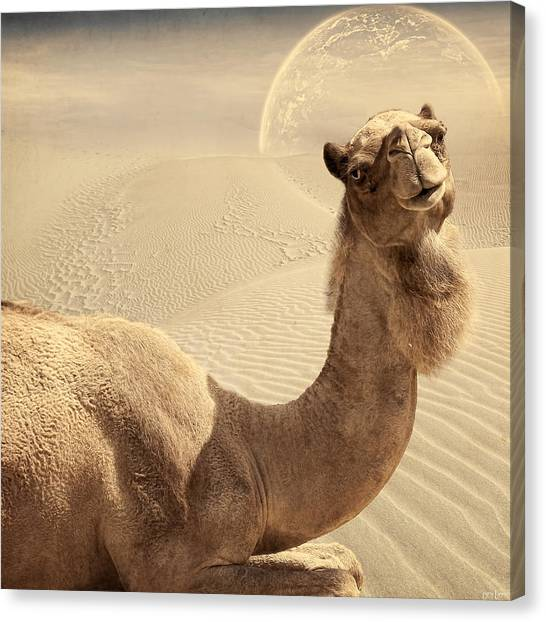 Arabian Desert Canvas Print - Looking At Ya by Lourry Legarde