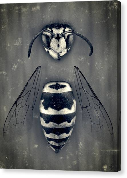 Wasp.insect Canvas Print - Looking Down Upon Myself by Adam Romanowicz