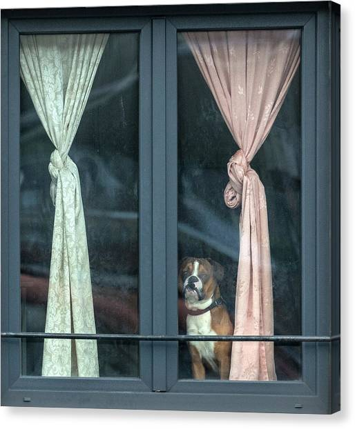 Knot Canvas Print - Looking For His Buddy by Jef Van Den