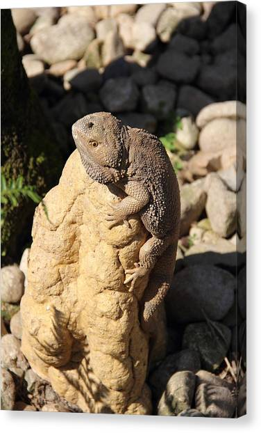 Canvas Print featuring the photograph Looking For Lunch by Debbie Cundy