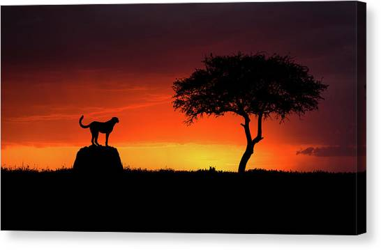 Cheetahs Canvas Print - Looking For Something by Faisal Alnomas