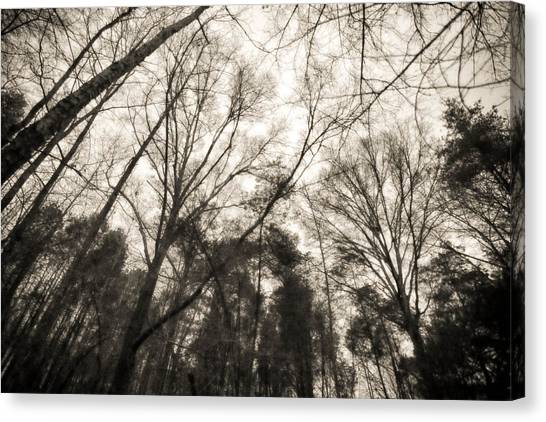 Looking Up At Trees Canvas Print