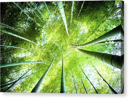 Looking Up In The Bamboo Grove Canvas Print by Marser