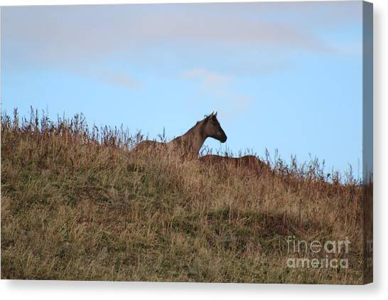 Lookout Canvas Print by Brenda Henley