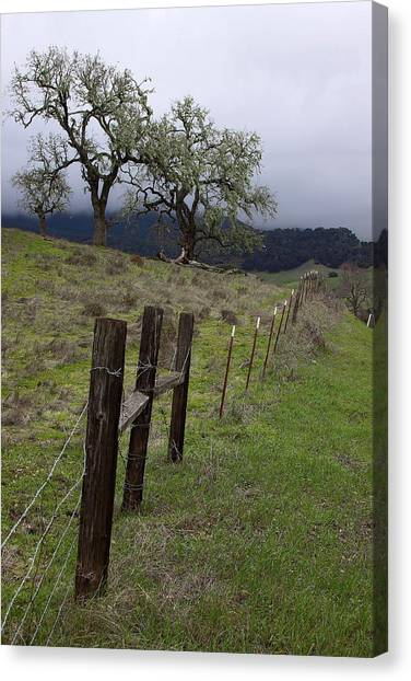 Los Padres National Forest Canvas Print