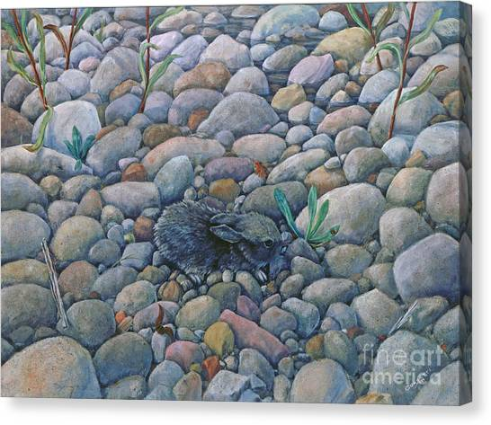Lost And Found Rabbit Canvas Print