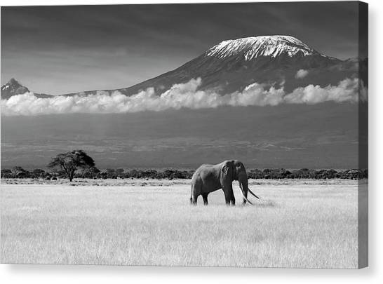 Kenyan Canvas Print - Lost Colors II by Ibrahim Canakci