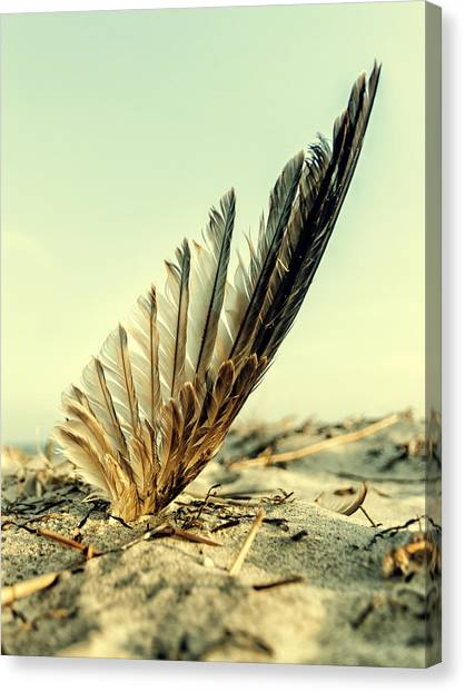 Lost Feather At The Beach Canvas Print