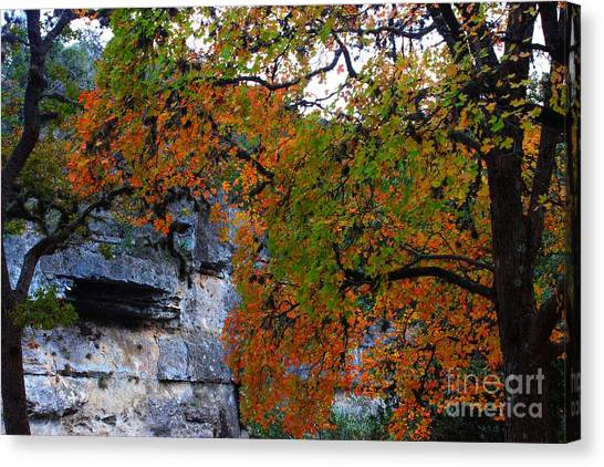 Fall Foliage At Lost Maples State Natural Area  Canvas Print