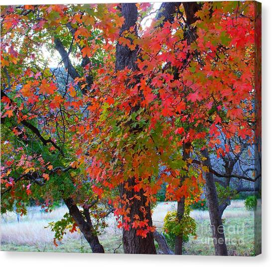 Lost Maples Fall Foliage Canvas Print