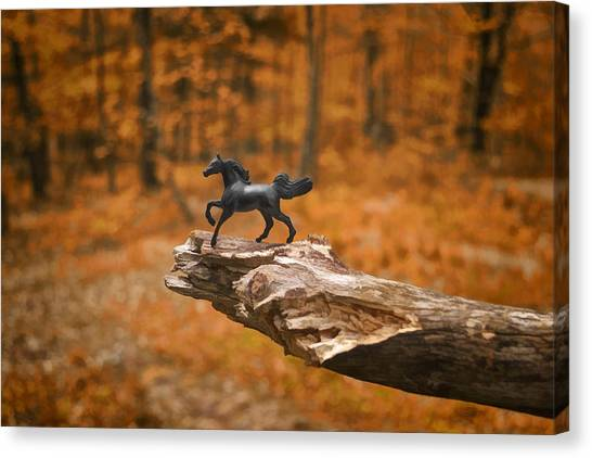 Lost Toy In The Woods Canvas Print