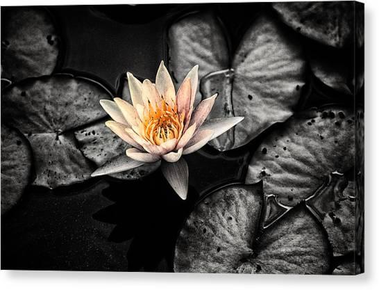 Lotus 2 Canvas Print