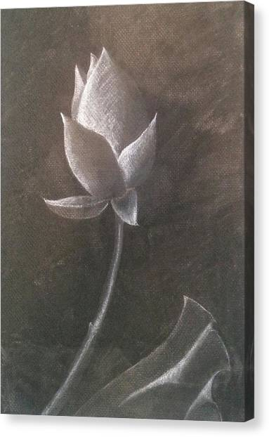 Lotus  Canvas Print by Amy Jago-Ford