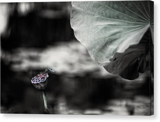 Lotus And Dragonfly 2 Canvas Print