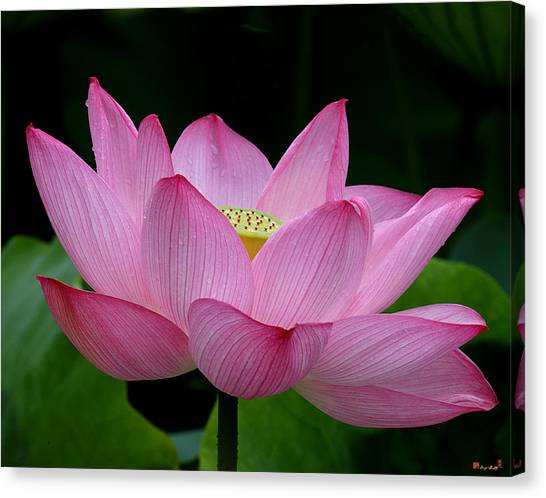 Lotus-center Of Being IIi Dl033 Canvas Print