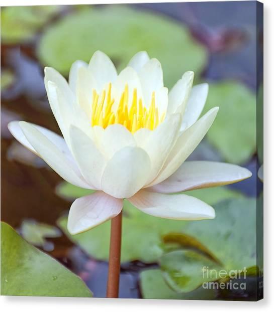 Lotus Flower 02 Canvas Print