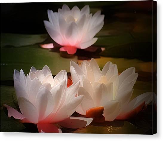 Lotus Flower 6 Canvas Print by Ernestine Manowarda