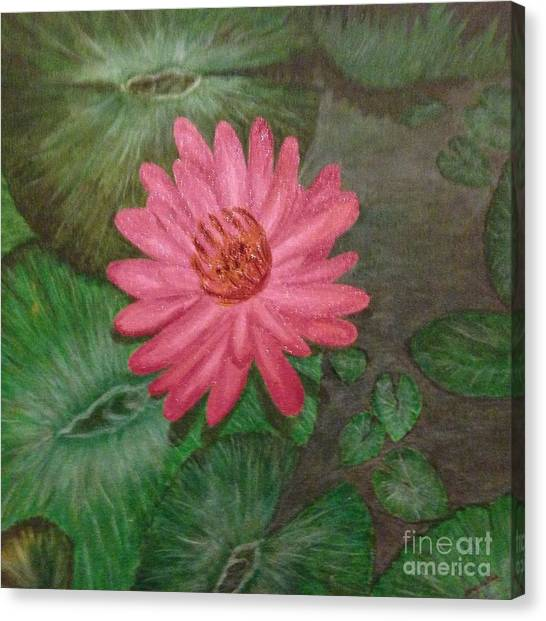 Water Lilly Canvas Print by S P