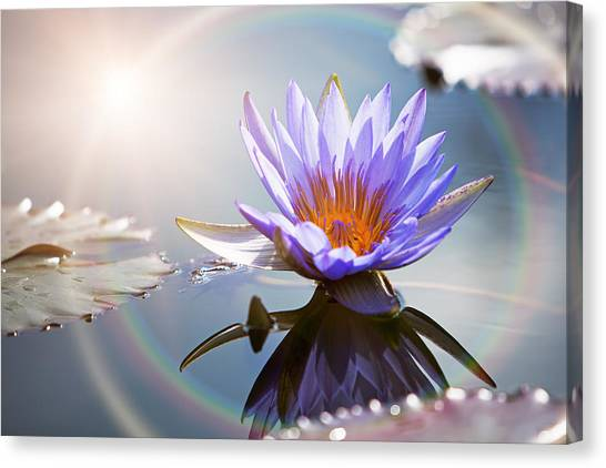 Lotus Flower With Sun Flare Canvas Print