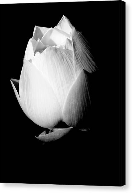 Lotus In Black And White Canvas Print
