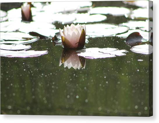 Ponds Canvas Print - Lotus Love by Stella Robinson