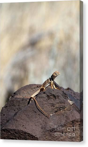 Lounging Lizard Canvas Print