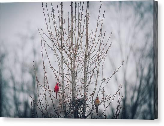 University Of Louisville Canvas Print - Love Birds by Amber Flowers