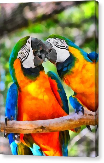 Love Bites - Parrots In Silver Springs Canvas Print
